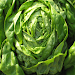 Download Lettuce 1.0 APK